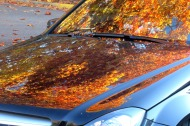 Autumn Reflection on Car