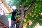 Zach, from Northern Lights, puts up Christmas lights in Fairhaven.