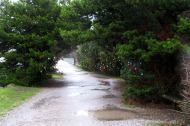 Rainy Post-Christmas in Bellingham