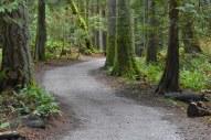 Trail around Lake Padden, Bellingham, WA.