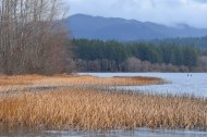Lake Padden, Bellingham, WA.