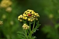 ladybug this one